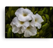 Bower Vine Canvas Print