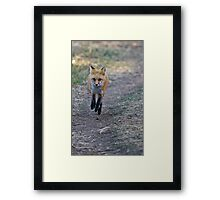 Three Off The Ground Framed Print