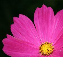 Cosmic Bloom by kristieb
