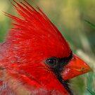 Red's Eye Exam by Dennis Jones - CameraView