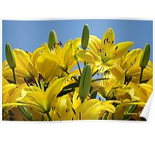 Yellow Lilies Sky High Poster