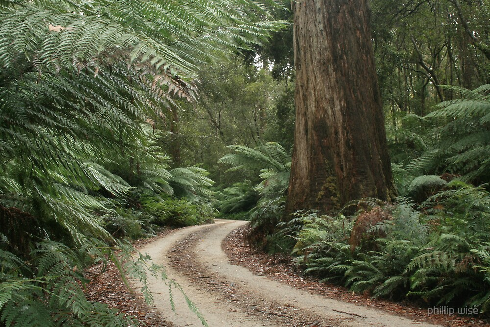 Spoin Kop road, far nor west Tasmania , Australia by phillip wise