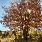 Cape Breton Autumn by EvaMcDermott
