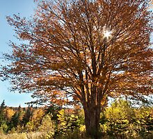 Cape Breton Autumn by EvaMcDermott