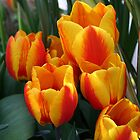 Orange Tulips! by Linda Jackson