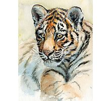 Tiger Cub portrait 865 Photographic Print