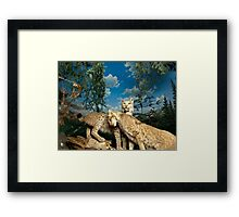 Natural environment diorama - two leopards  Framed Print