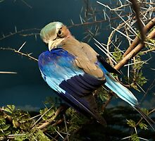 Natural environment diorama - bird with blue wings  by Reinvention