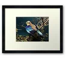 Natural environment diorama - bird with blue wings  Framed Print