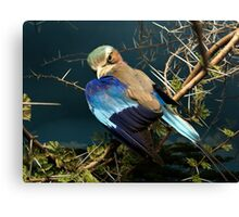 Natural environment diorama - bird with blue wings  Canvas Print