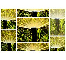 Meet : The Sprinklers, the next door neighbors..  Photographic Print