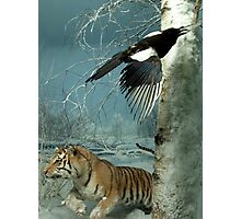 Natural environment diorama - a tiger and a bird in the snow  Photographic Print