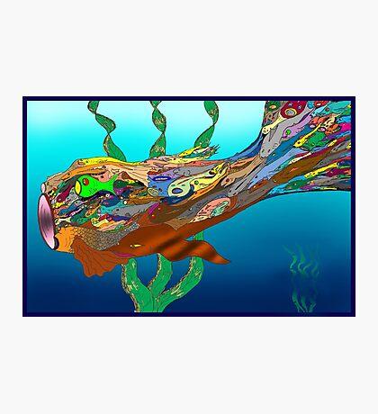 Fish - Plural Photographic Print