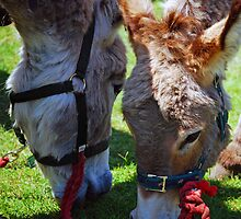 Donkeys  by Nigel Bangert