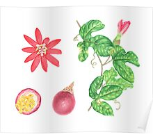 Red Passion Fruit Poster