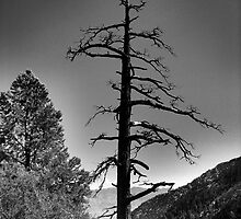 Mt. Whitney Tree by Michael McCasland