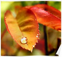 Golden Red Droplet Poster