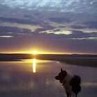 Border Collie Sunset by Michael Haslam