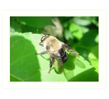B is for Bumble Bee Art Print