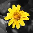 Yellow by Cydell