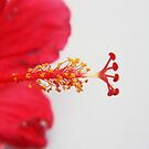 Pollen by Cydell