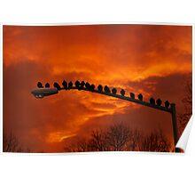 Enjoying The Sunset  Poster