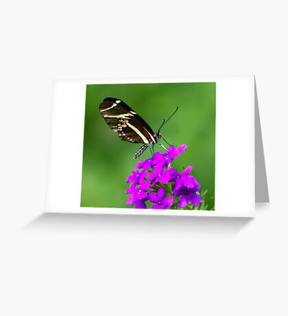 Zebra Longwing on Purple Greeting Card