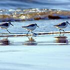 C'mon Everybody, Do the Sand Piper Strut! by Polly Peacock