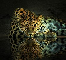 Leopard by Gene Praag
