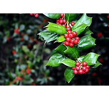 Holly Leaf and Berries Photographic Print
