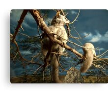 Natural environment diorama - Fox squirrel resting on a branch  Canvas Print