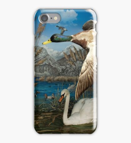 Natural environment diorama - a mallard and a swan in a pond  iPhone Case/Skin