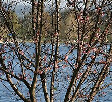 BLOSSOMS BY THE LAKE by danlyncas