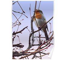 Fantastic wildlife art - The Resting Robin - Digital Painting Poster