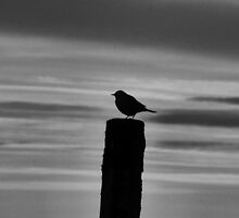 SMALL BIRD BIG SKY by photobox