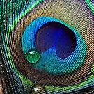 Peacock Feather by Ellesscee
