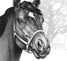 Stare of the Stallion by Patricia Howitt