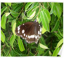 Brown Butterfly Landing Poster