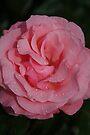 Powder Puff Pink by Deborah McGrath