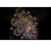 Colorful Fractal 3 Photographic Print