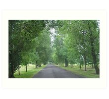 Tree-lined Drive Art Print