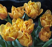 Peony Tulips by annabelleny