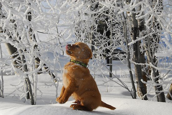 Tasting Frost by Janet Houlihan