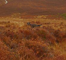 Hiding in the Heather by nikki harrison
