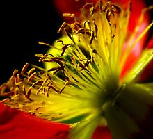 Floral Explosion I by edoray