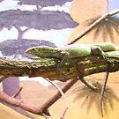 lizard by carol oakes