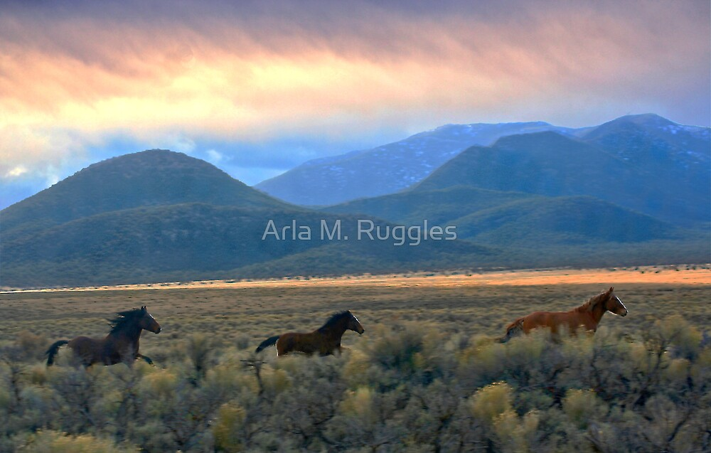 Wild As The Wind ... by Arla M. Ruggles