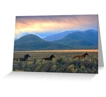 Wild As The Wind ... Greeting Card