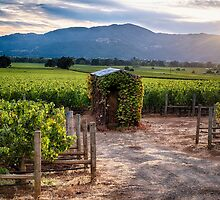Little Shed in a Vineyard by George Oze
