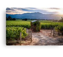 Little Shed in a Vineyard Canvas Print